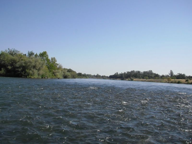 Riffles of the Lower Sacramento River's famous trout waters