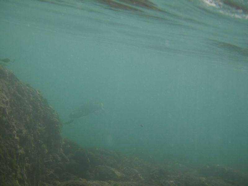 Under water Mccloud 2009: