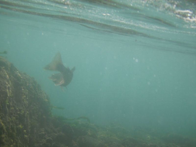 Under water2 Mccloud 2009: