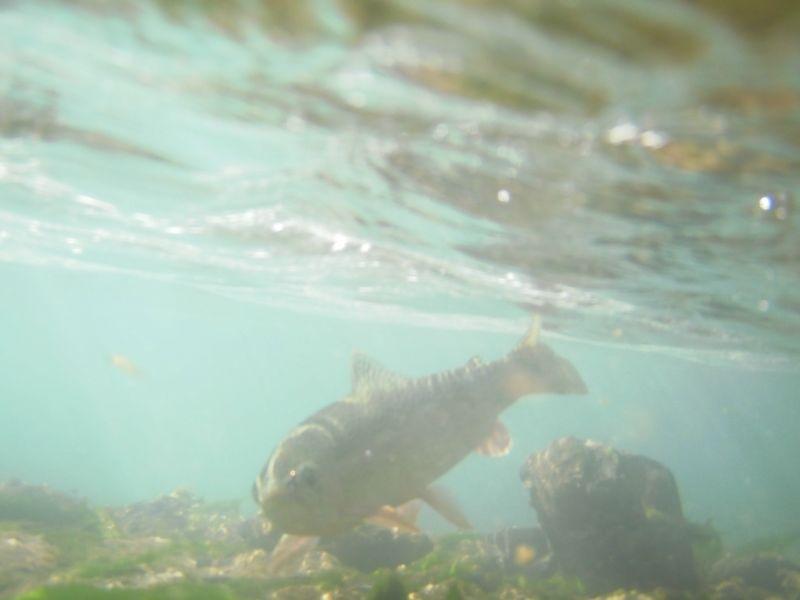 Under water9 Mccloud 2009:
