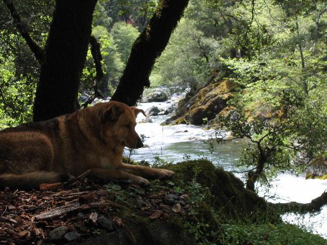 Baum Lake Guide Mtshasta Com Jack Trout S Weblog