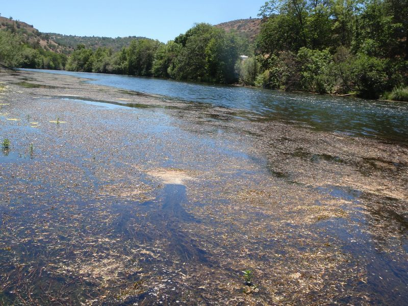 Klamath River Algae Blooms Unhealthy 2010