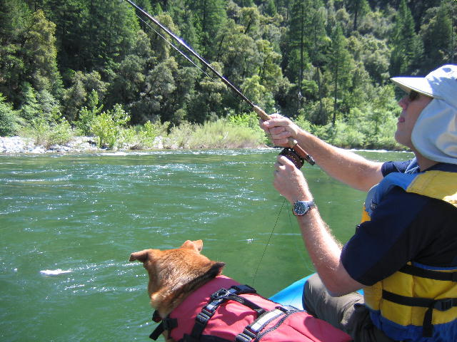 Shasta Trout Dog 2