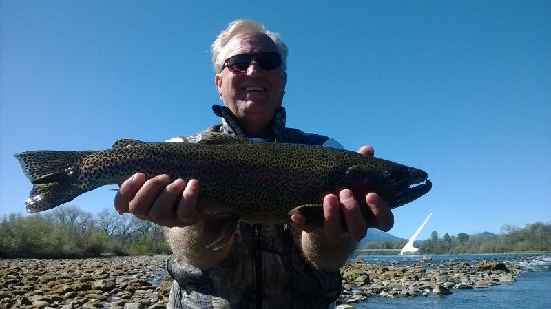 Lower Sac Jack Trout fly fishing