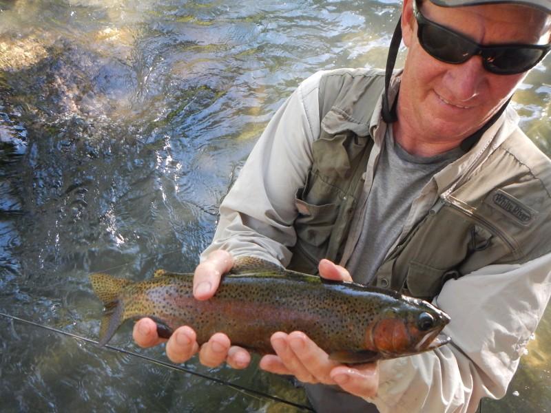 Dolly Varden Extinct Mccloud River Jack