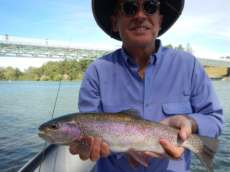 Northern california fly fishing summer report trout for Trout fishing northern california