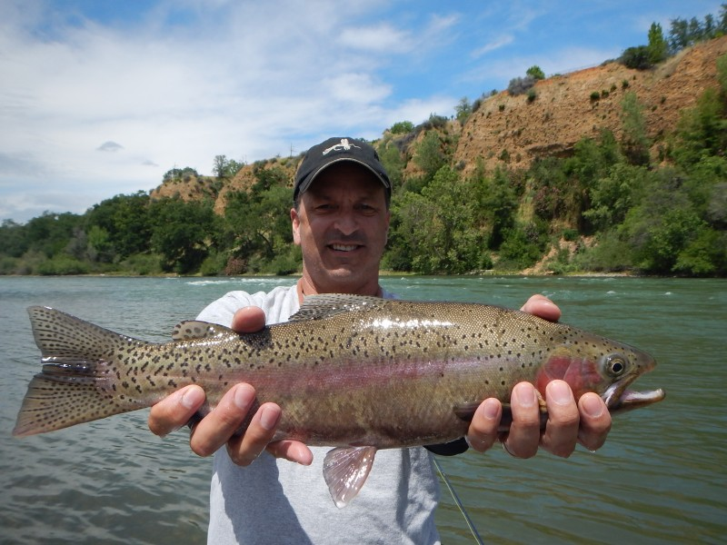 Northern california fly fishing summer report trout for Trout fishing california