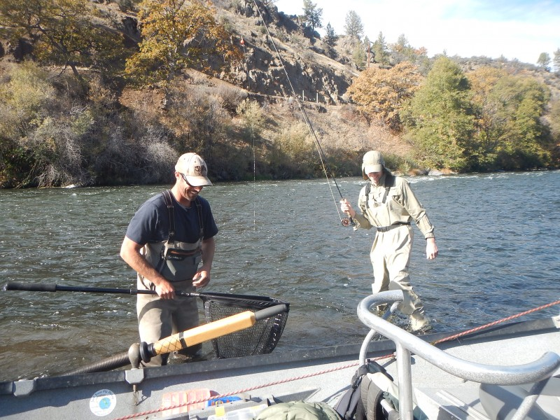 Middle Klamath River Steelhead Jack Trout