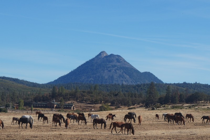 black-butte-shasta-valley