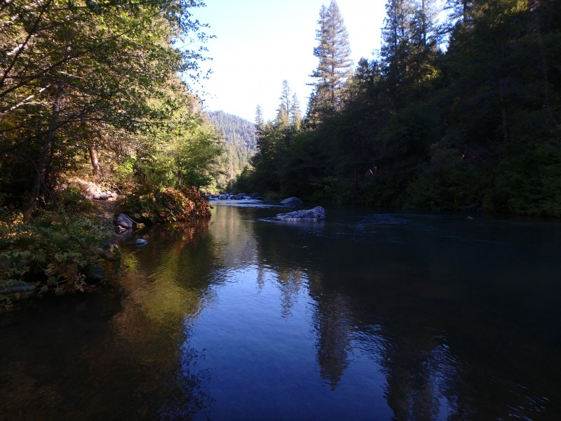 McCloud River Rainbows