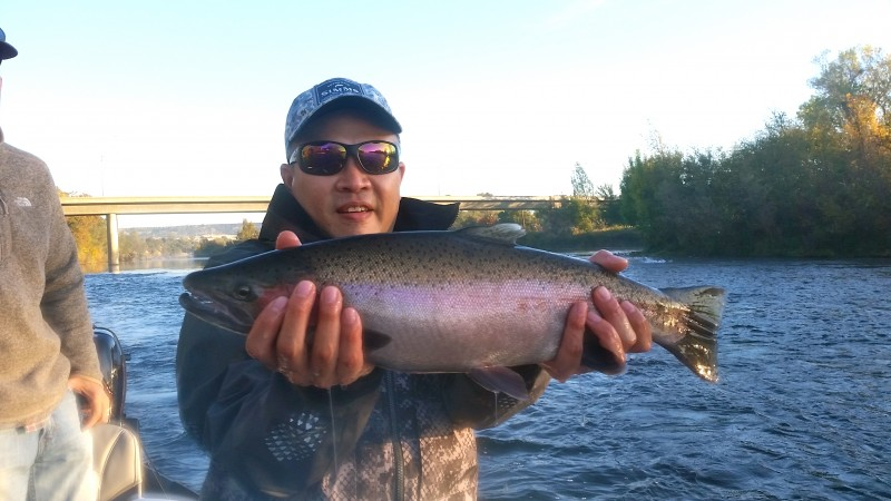 Feather River Steelhead Jack Trout Fly Fishing