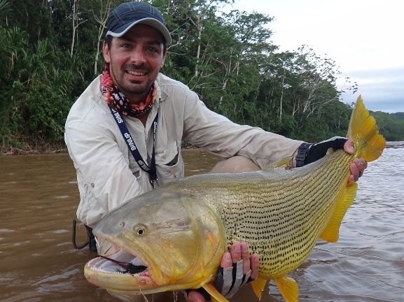 Golden Dorado Fly Fishing South America