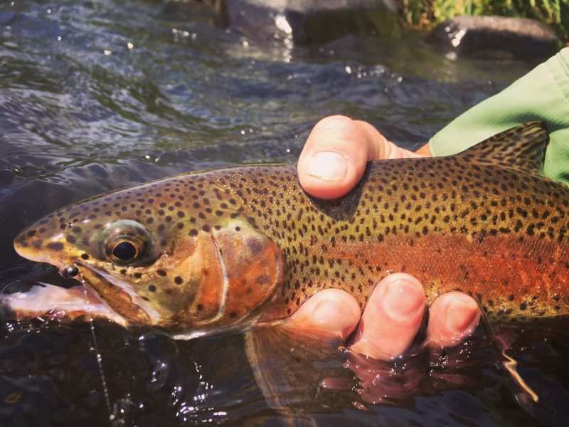 Deschutes River Fly Fishing Guide