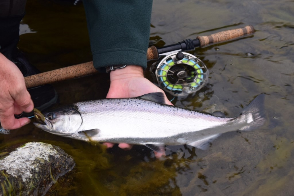 Lower Klamath California fly fishing