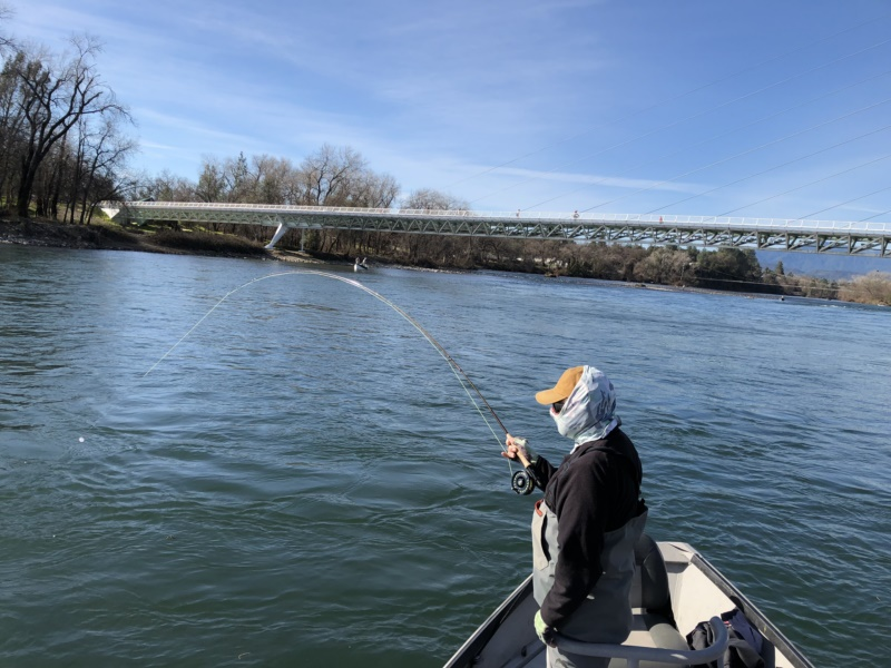Fishing Lower Sac Nor Cal