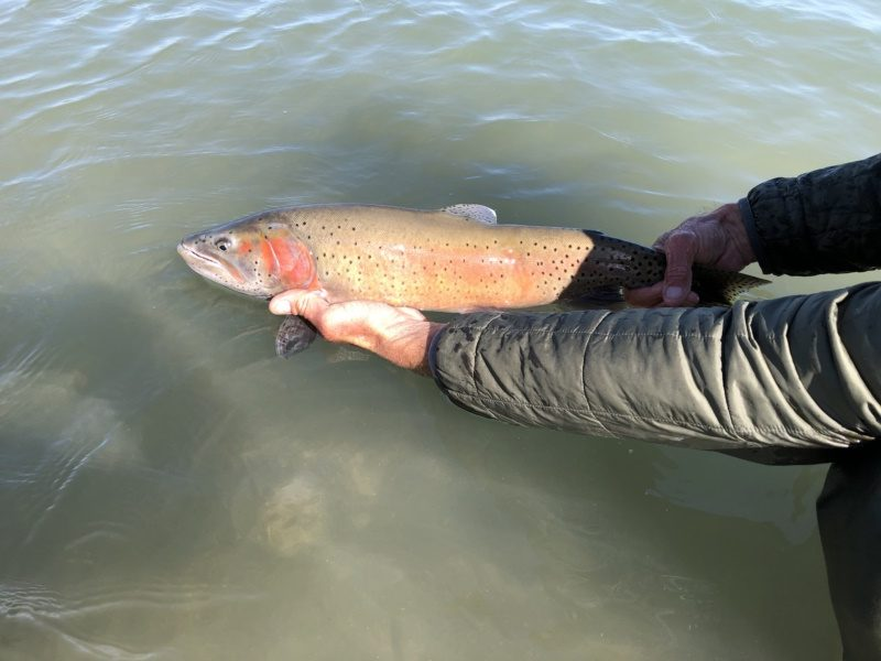Group Fly Fishing Guide Outfitters Pyramid lake