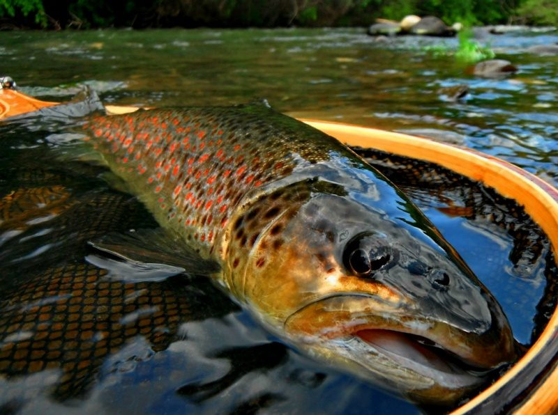 Romania fly fishing stories reports