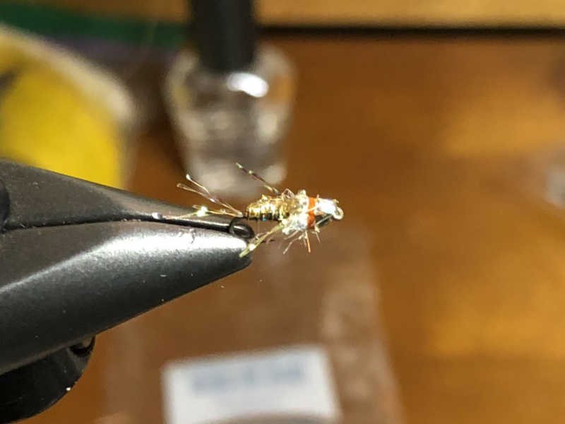 California Golden State Fly