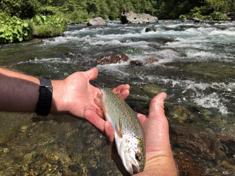 mtshasta com - jack trout\'s weblog