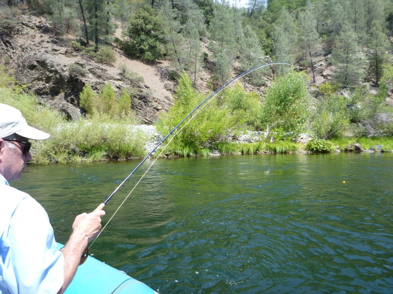 Shasta dam fish passage map jack trout 39 s for Lake shasta fishing