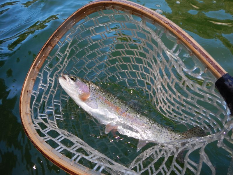 Fishing northern california jack trout 39 s for Trout fishing northern california